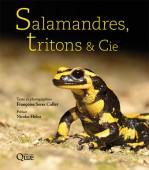 Salamandres, Tritons & Cie (de France)