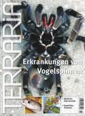 19 Erkrankungen von Vogelspinnen
