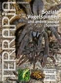30 Soziale Vogelspinnen und andere soziale Spinnen
