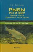 Fisch der Flüsse und Seen des Mittelgürtels des europäischen Teils von Russland
