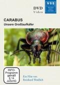 Carabus - Unsere Großlaufkäfer