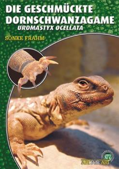Die Geschmückte Dornschwanzagame: Uromastyx ocellata
