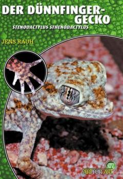 Der Dünnfingergecko - Stenodactylus sthenodactylus