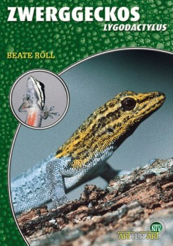 Zwerggeckos, Lygodactylus