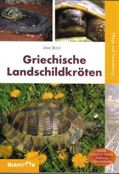 Griechische Landschildkröten Pflege und Zucht