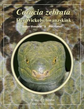 Der Wickelschwanzskink Corucia zebrata