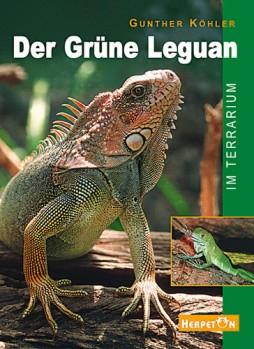 Der Grüne Leguan im Terrarium