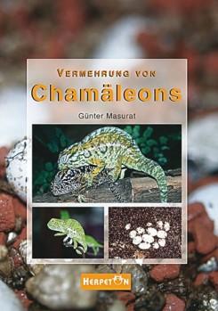 Vermehrung von Chamäleons