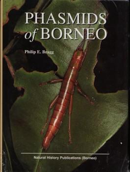 Phasmids of Borneo