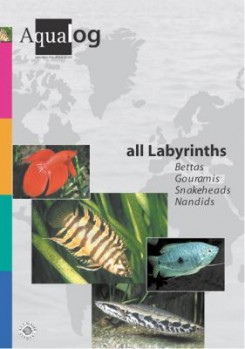 Reference fish of the world, Band 06, All Labyrinths. Bettas, Gouramis, Snakeheads, Nandids