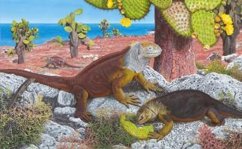 Galapagos Land Iguana (Conolophus subcristatus),