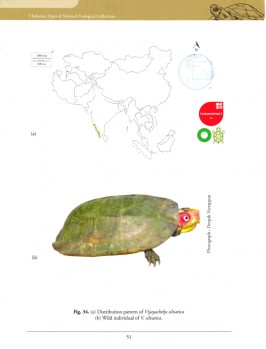 Chelonian Types of National Zoological Collections