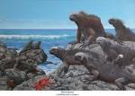 Marine Iguanas/Meerechse  – Amblyrhynchus cristatus
