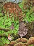 MATAMATA – Fransenschildkröte (Chelus fimbriata)