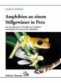 Amphibien an einem Stillgewässer in Peru