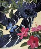Boelen's Python - Morelia boeleni