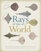Rays of the World
